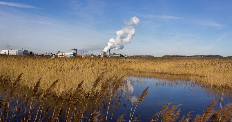 Wetland near steel factory